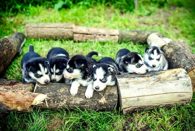 Vrij kleine schor puppy openlucht in de tuin