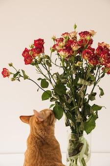 Vrij rode kat die rood rozenboeket in vaas tegen witte muur snuiven