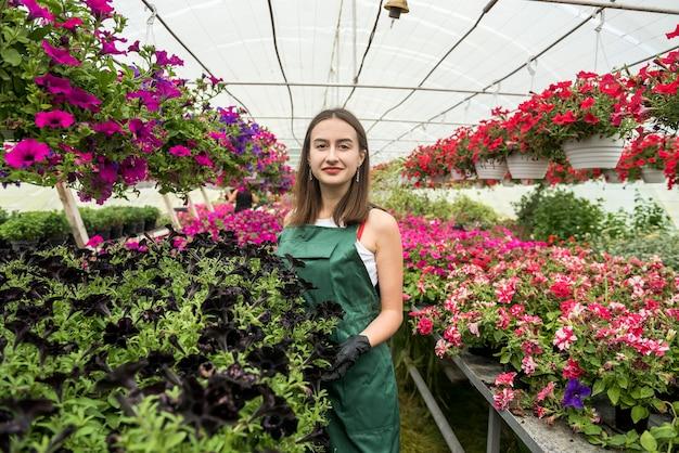 Vrij vrouwelijke kwekerij die met bloemen in de mooie lichte kas werkt. lente