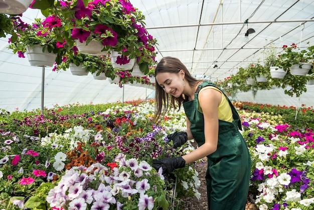 Vrij vrouwelijke kwekerij die met bloemen in de mooie lichte kas werkt