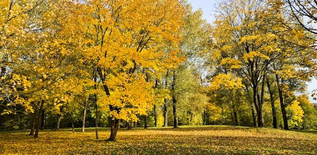 Vroeg herfstgebladerte van de herfstgebladerte van bomen die door zonlicht in het de herfstseizoen worden verlicht, blauwe hemel.