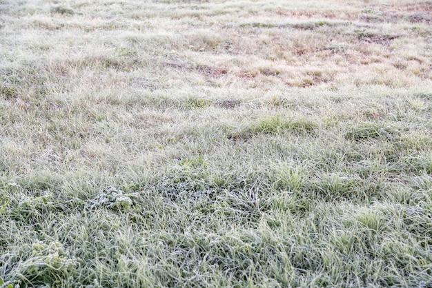 Vroeg in de ochtend bevroren rijp gras in de herfst.