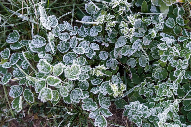 Vroeg in de ochtend bevroren rijp gras in de vroege herfstochtend