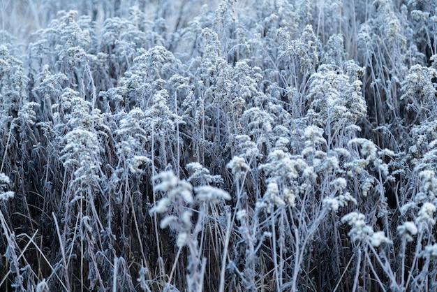 Vroeg in de ochtend bevroren rijp gras in de vroege herfstochtend.