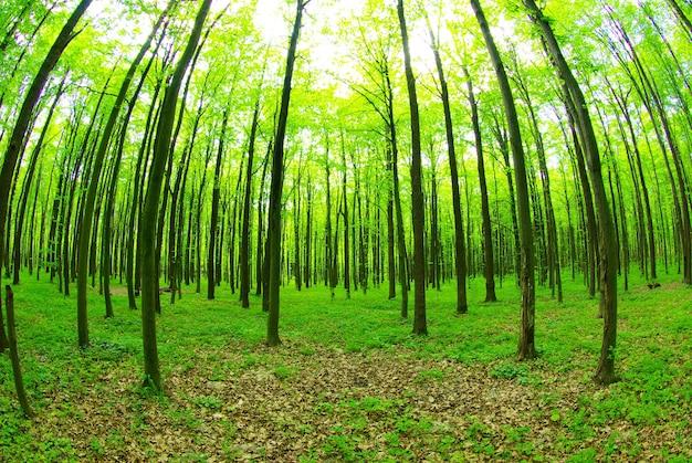 Vroege ochtendzon in het groene bos