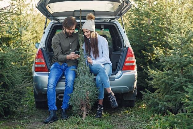 Vrolijke bebaarde man en mooie vrouw in hoed zitten in auto kofferbak fir boom te houden en het gebruik van smartphone op plantage gebied