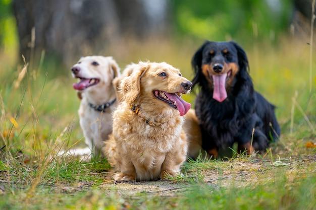 Vrolijke en schattige groep van kleine rassen op de achtergrond van de natuur. dieren en honden.
