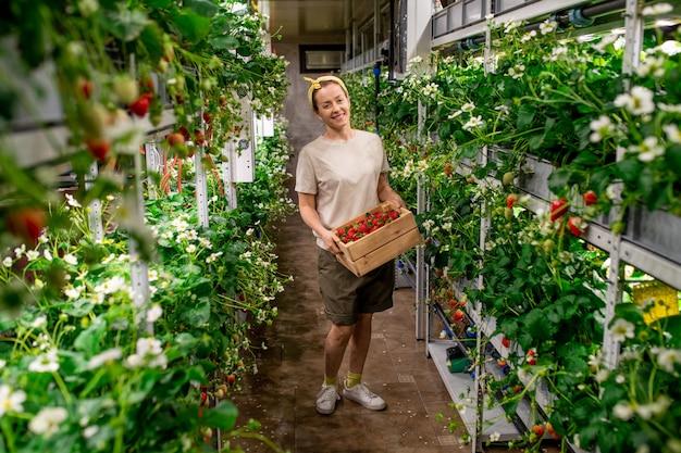 Vrolijke jonge vrouwelijke werknemer van verticale boerderij met houten kist met verse rijpe aardbeien terwijl ze in het gangpad tussen planken staat