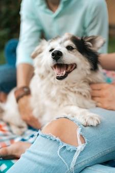 Vrolijke oude hond lachend zittend op de schoot van zijn liefdevolle mensen. gelukkige paar jongens spelen met hun hond.