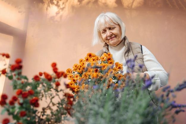 Vrolijke oude vrouwelijke tuinman die lacht en voor bloeiende planten zorgt