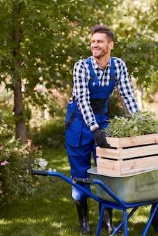 Vrolijke tuinman die zaailing plant