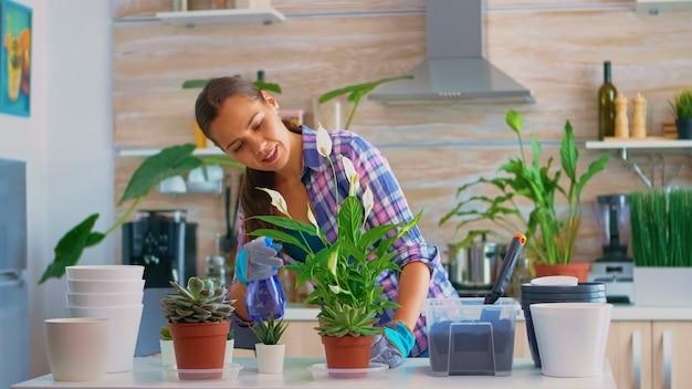 Vrolijke vrouw die planten in de keuken thuis castreert. met behulp van vruchtbare grond met schop in pot, witte keramische bloempot en kamerplant voorbereid voor herbeplanting voor huisdecoratie om ze te verzorgen.