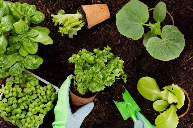 Vrouw aanplant van jonge zaailingen van sla salade in de moestuin