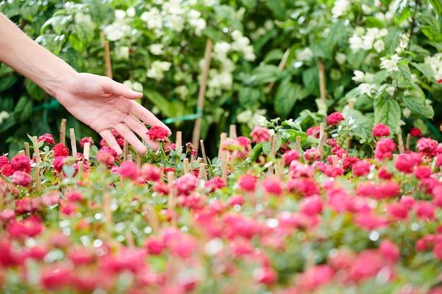 Vrouw aanraken van bloeiende bloemen