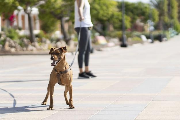 Vrouw achter een bruine hond in het park