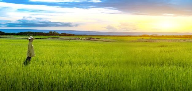 Vrouw boer staat op zoek naar groene rijstzaailingen in een rijstveld met prachtige lucht en wolken