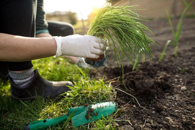 Vrouw die bieslook plant in haar enorme tuin tijdens de mooie lente, tuinieren concept