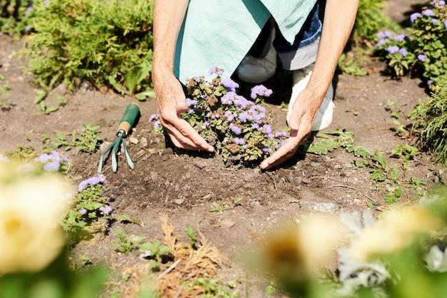 Vrouw die bloemen in tuin dicht omhoog planten