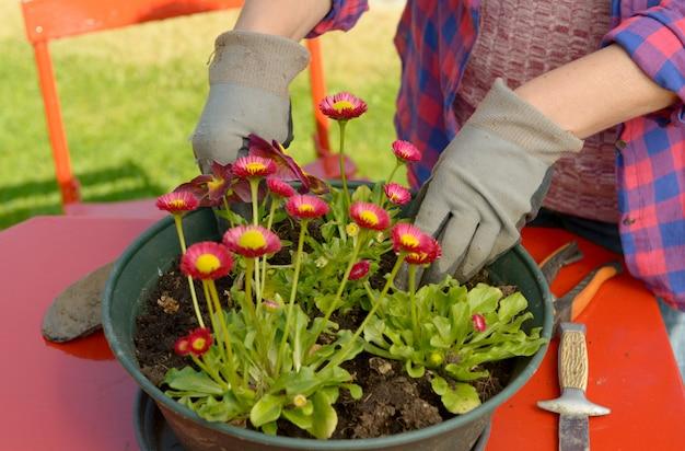 Vrouw die bloemen in tuin planten