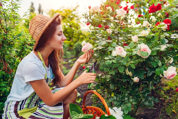 Vrouw die bloemen in tuin verzamelt. tuinman snijden rozen weg met een schaar. zomer tuinieren. verzorgen van planten