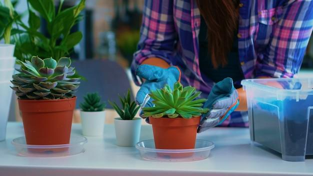 Vrouw die bloemen kiest voor herbeplanting zittend op de keukentafel. met behulp van vruchtbare grond met schop in pot, witte keramische bloempot en huisbloem, planten voorbereid voor opplant voor huisdecoratie.