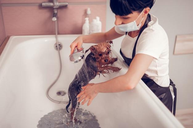 Vrouw die douche gebruikt. donkerharige vrouw die douche gebruikt tijdens het wassen van schattige kleine hond na het scheren