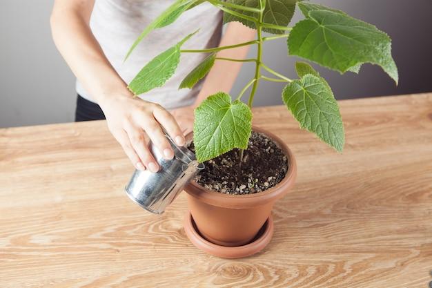 Vrouw die een boom in een pot water geeft