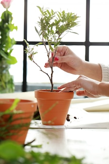 Vrouw die een kleine boom binnen het huis plant
