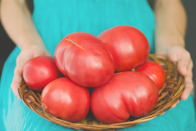 Vrouw die een mand met zeer grote tomaten houdt