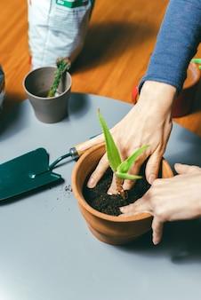 Vrouw die een plant in een pot thuis aanbrengt