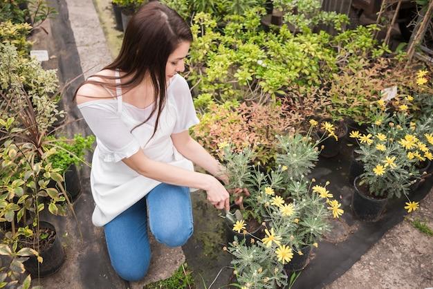 Vrouw die gele bloemen ingemaakte installatie behandelen