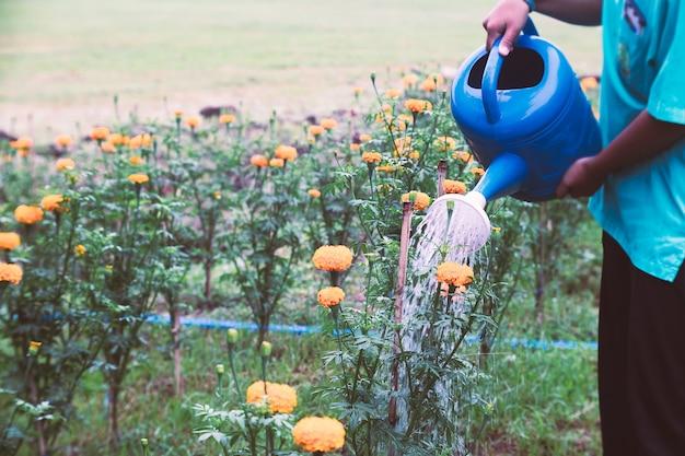 Vrouw die goudsbloembloemen in de tuin water geven