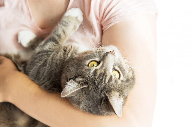 Vrouw die grijze gestreepte kat op handen houdt. grijze kat en dierenarts