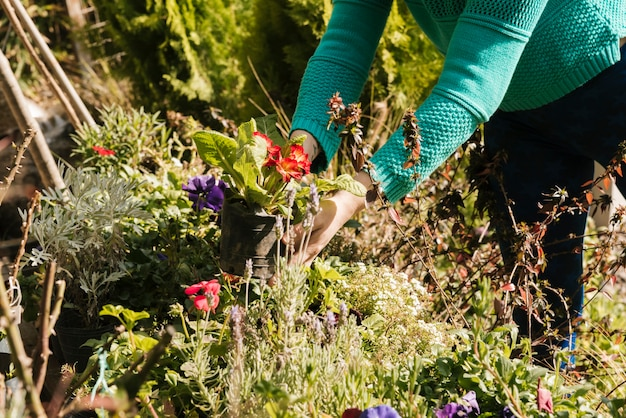Vrouw die haar tuin op zonnige dag schoonmaakt