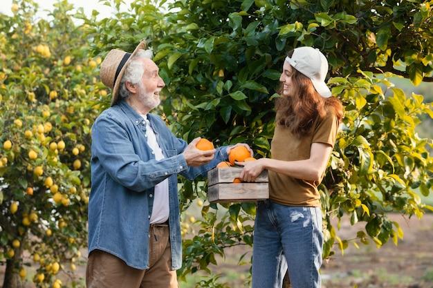 Vrouw die haar vader helpt om wat sinaasappels uit de bomen in de tuin te halen