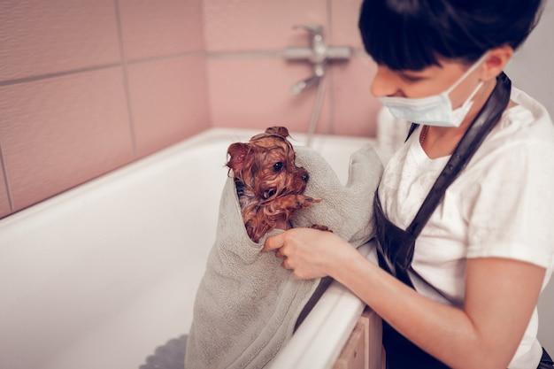 Vrouw die handdoek gebruikt. donkerharige vrouw in uniform met handdoek tijdens het drogen van de hond na het wassen