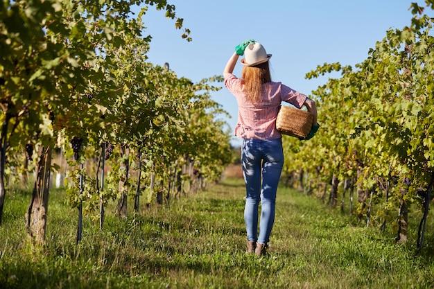 Vrouw die in een wijngaard werkt