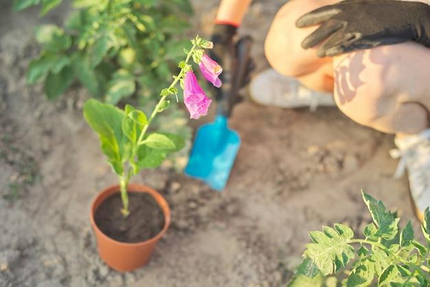 Vrouw die in handschoenen met het tuinieren hulpmiddelen bloemen in de lentetuin planten