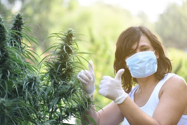 Vrouw die in hennepplantage voor cbd-extractie werkt die ok geeft.