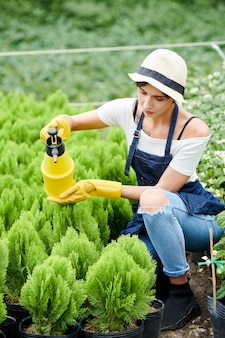 Vrouw die kleine cipressenplanten verzorgt