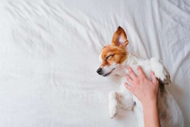 Vrouw die knuffels maakt aan haar leuke kleine hondslaap op bed. liefde voor dieren concept. levensstijl binnenshuis