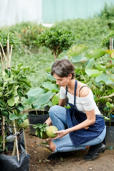 Vrouw die oogst verzamelt
