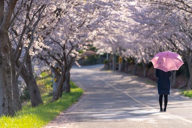 Vrouw die op de weg van de kersenbloesem loopt