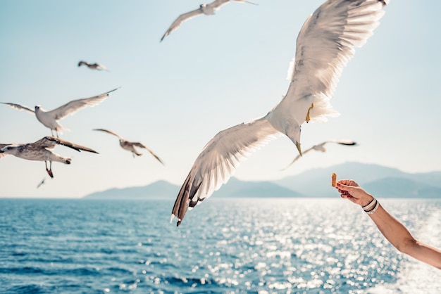 Vrouw die op veerboot reizen en zeemeeuwen voeden