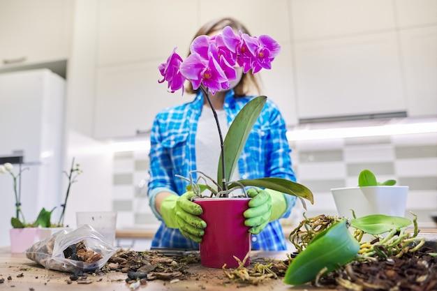 Vrouw die plant phalaenopsis-orchidee verzorgt, wortels afsnijdt, grond verandert, ruimte keukeninterieur