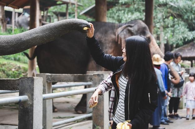 Vrouw die thaise olifant voedt