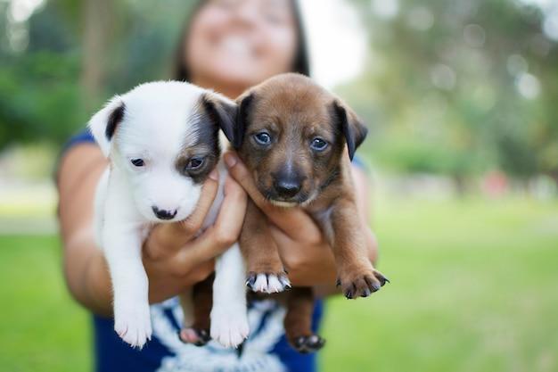 Vrouw die twee puppy houdt die op de voorgrond kijken.