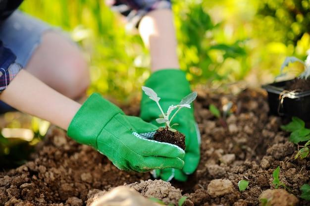 Vrouw die zaailingen in bed in de tuin planten bij de zomer zonnige dag