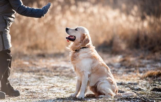 Vrouw eigenaar high five tot golden retriever hond tijdens vroege lente wandeling buitenshuis meisje met hondje huisdier ...