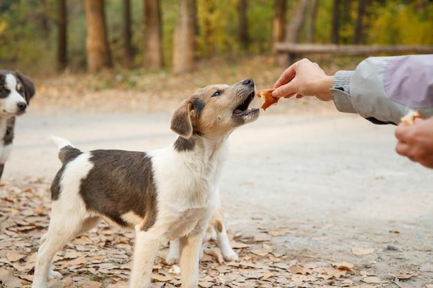 Vrouw geeft dakloze honden eten. vrouwenhand die de puppy in het park voedt.